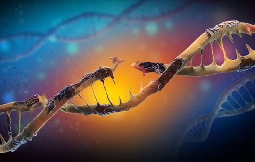 Astaxanthin การลดความเสียหายที่มีต่อดีเอ็นเอ