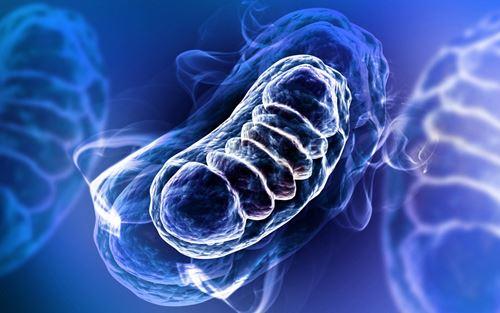 Astaxanthin ปกป้องไมโทคอนเดรียอย่างมีประสิทธิภาพ